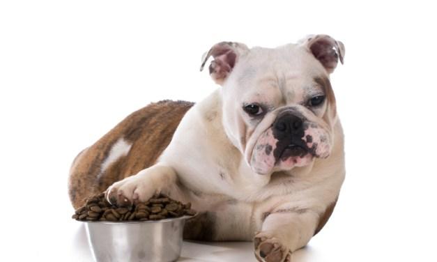 Karmy bezzbożowe dla psów