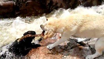 unleashed-dog-rescuing-dog