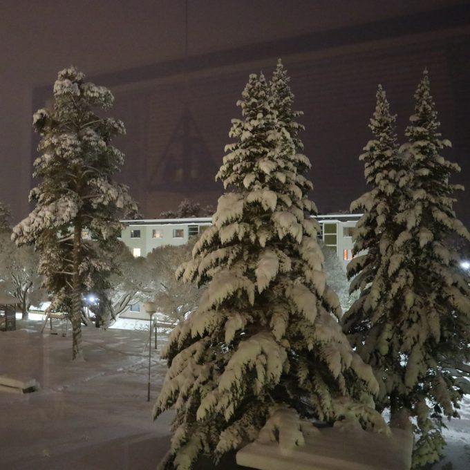 Lumiset pihapuut.