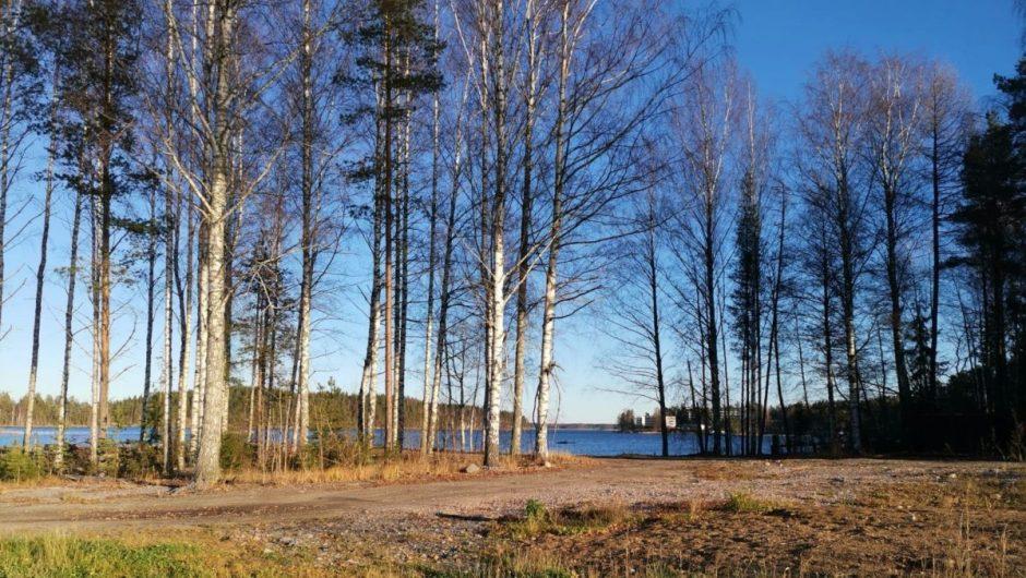 Lehdetön puu ja Saimaa.