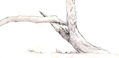 Luray Tree