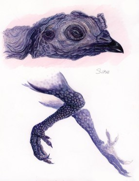 1 of a 5 part Studies for scientific illustration. Watercolor, gouche, conte crayon.