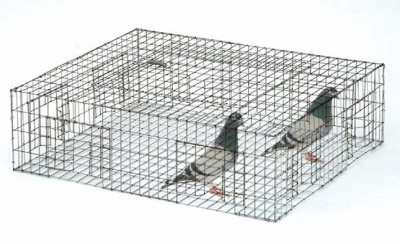 trap-cage