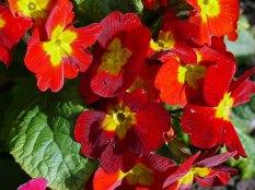flower3(apr17)