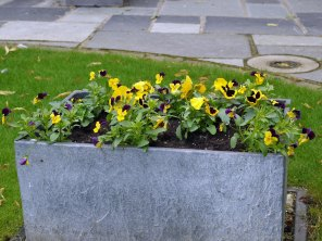 pansy-planter(jul17)