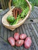 garden-produce2(sep17)