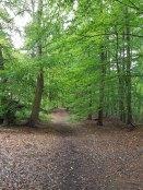 woodlland-walk(sep17)