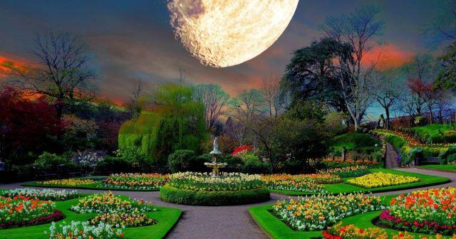 Seuraatko sinä kuukalenteria puutarhan hoidossa?