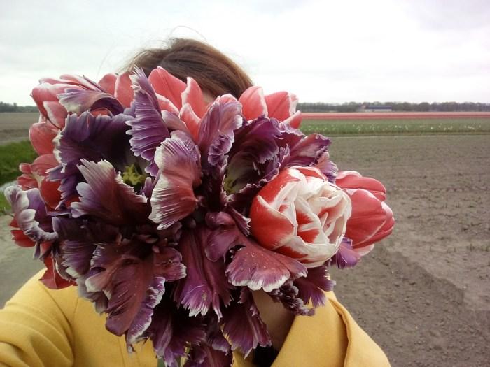 tulipanova20