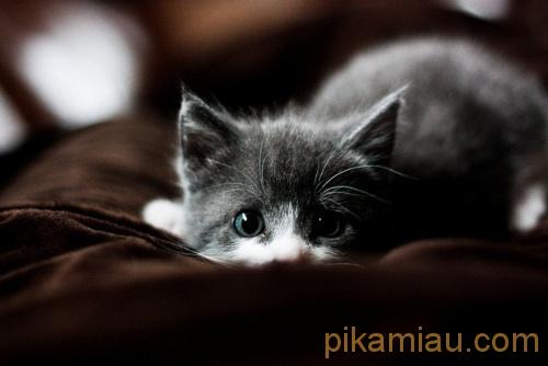 gato x 2