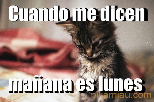 gato triste lunes