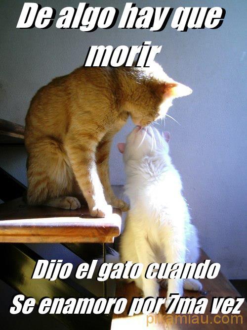gato septima vez