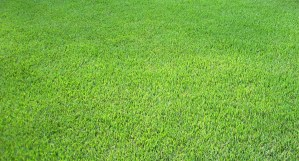 Pike Creek Turf - Meyer Zoysia
