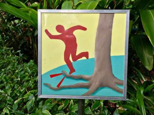 Tässä kuvitus kampaajan arboristille antamassa ohjeessa: varo juurikasvua.