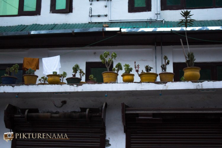 yellow flower vases at Pahalgam town