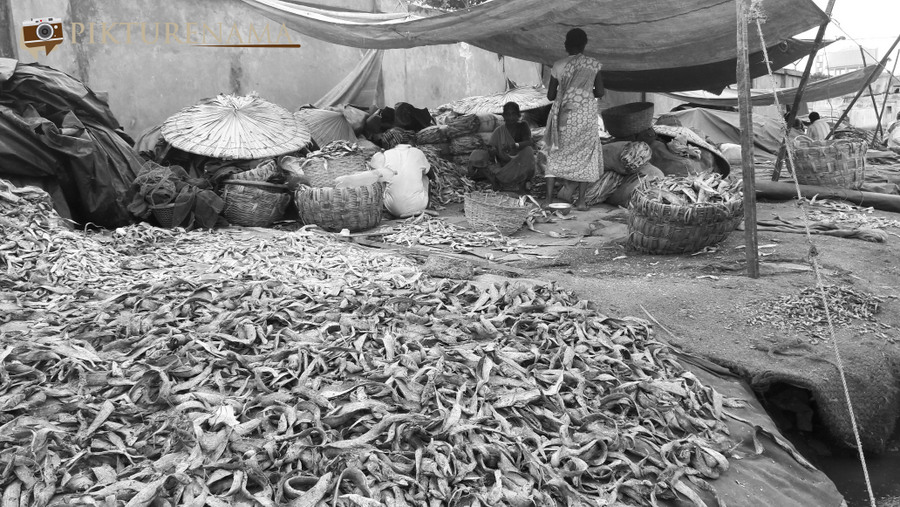 Vizag fishing harbour 18