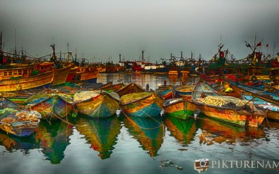 Its all fishy in Vizag fishing harbour