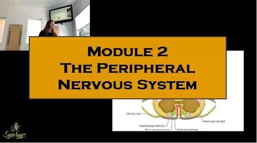 Module 1  Neuromuscular connections course Pilates Instructors