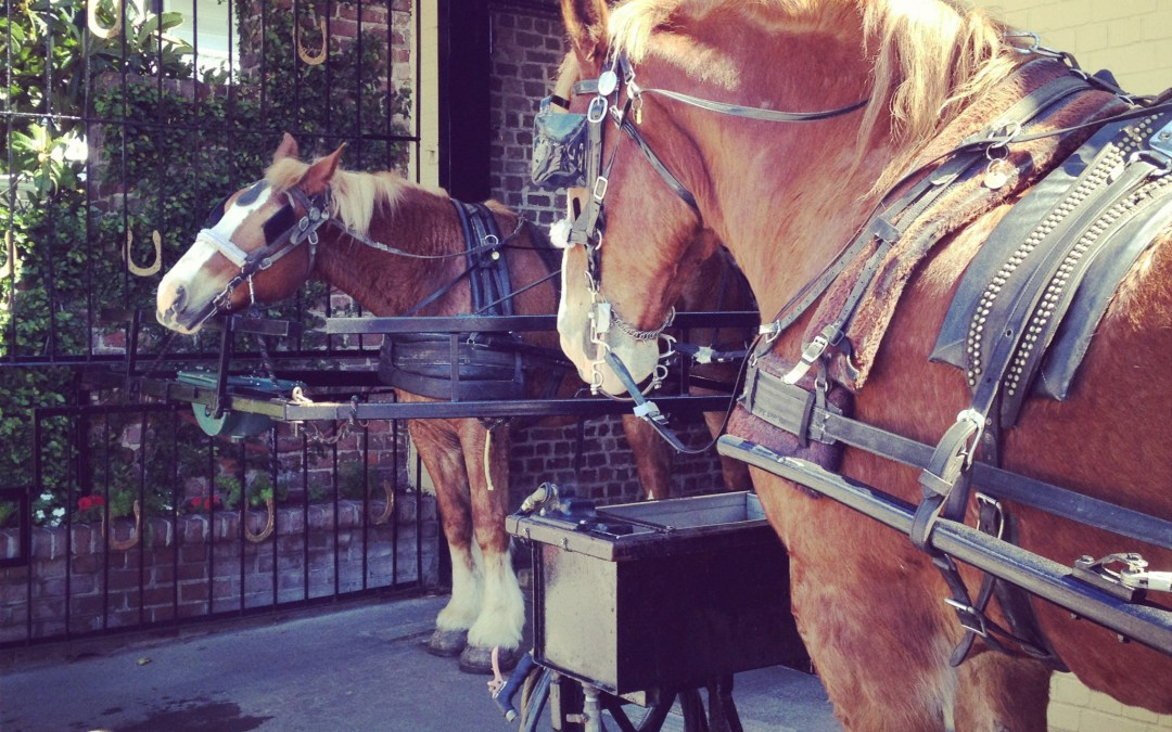Downtown Charleston Carriage Tours