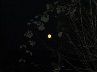 Der Mond leuchtet so hell, das ich keine Lampe brauche um den Weg durch den Wald nach Hause zu finden.