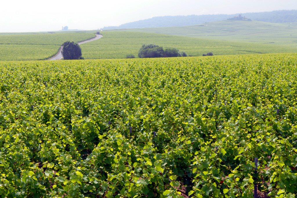 Vineyards and Moulin de Vezernay