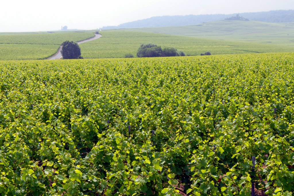 Vineyards and Moulin de Vezernay