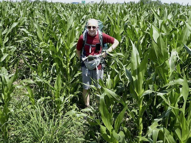 Between Ivrea and Santhia, Fertile Fields before the dreaded rice fields start!