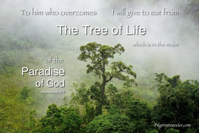 "Revelation 2:7 ""To him who overcomes I will give to eat from the tree of life, which is in the midst of the Paradise of God."""