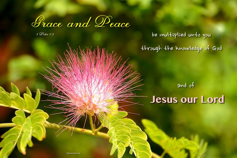 """2 Peter 1:2 """"Grace and peace be multiplied unto you through the knowledge of God, and of Jesus our Lord."""""""