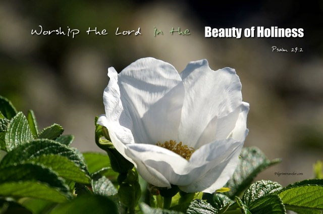 "Psalm 29:2 ""Worship the Lord in the beauty of Holiness."""
