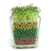 A Mini Garden In Your Room