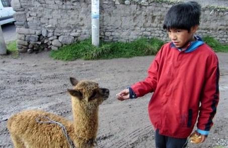Arequipa,Colca,Peru (71) (800x533)