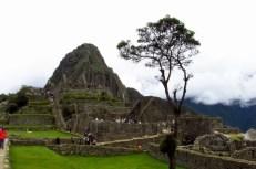 Machu Picchu, Peru (177) (800x533)