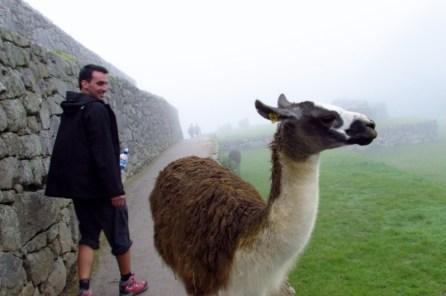 Machu Picchu, Peru (72) (800x533)