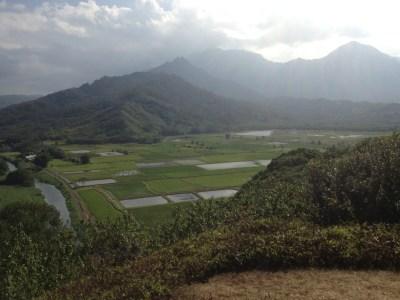 Farmland on Kauai