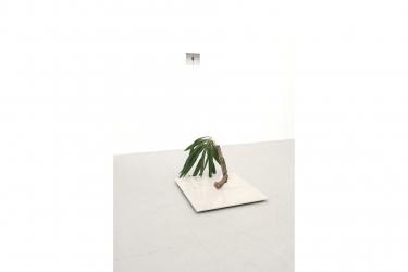 Palmtree (The Royal Hawaiian) | 2014 | yucca palm tree, cherry wood, faux marble, 77 x 60 x 60 cm / Fine Art Print , 13 x 18 cm | Photo © DMNDKT, Berlin
