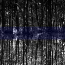 Theresa Schubert: The forestal Psyche, 2017, Hahnemühle Fine Art Print on Alu-Dibond, 90×160 cm, Ed. of 10