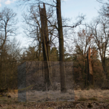 BETTY BÖHM: Reservat II, 2018, Fine Art Print on Alu-Dibond, Wood construction, Wood color, 200 × 140 × 60 cm © Betty Böhm