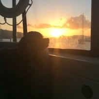 Patton enjoying the sunset from The Bight, Norman Island, B.V.I.