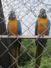 Birds at Belmont