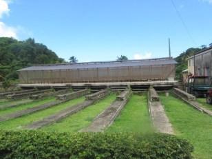 Cocoa Bean Drying Area in the Sun