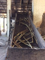 Raw sugar cane going up hydro-powered conveyer belt. The machine squeezes out the juice.