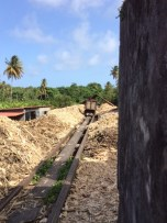 Discarded sugar cane is transported away for other uses