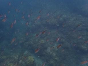 School of fish, Underwater Sculpture Park, Grenada