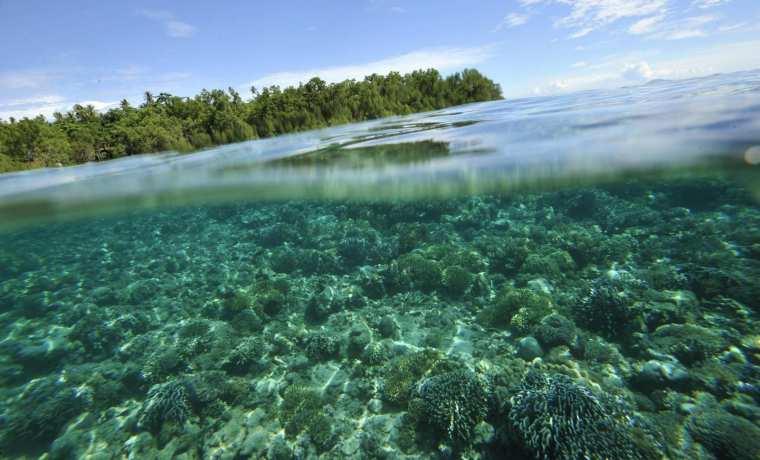 Calentamiento de océanos disminuye población de peces