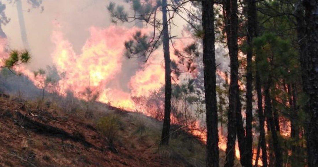 Actividad del hombre provoca 98 por ciento de incendios en el país