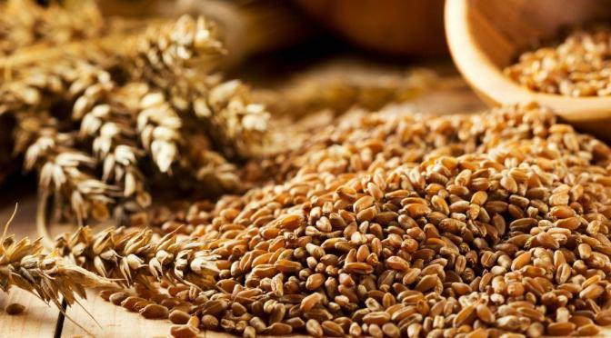 Almacenamiento adecuado, garantiza calidad de semillas y granos