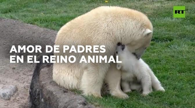 Momentos cariñosos entre animales y sus crías