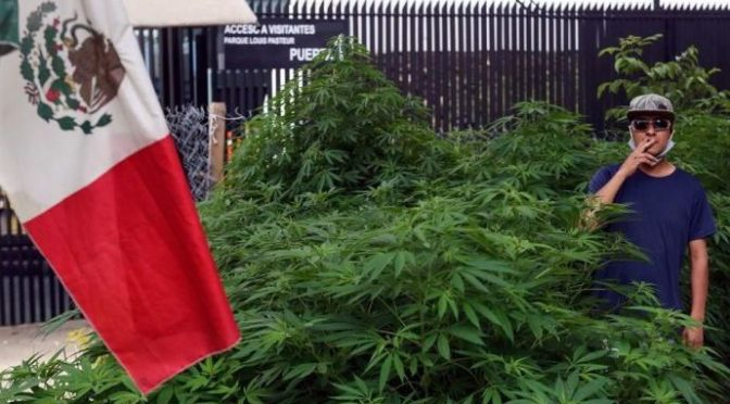 Mexicanos fuman marihuana en libertad en jardín aledaño al Senado