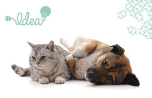 occupations activités chiens chats confinement